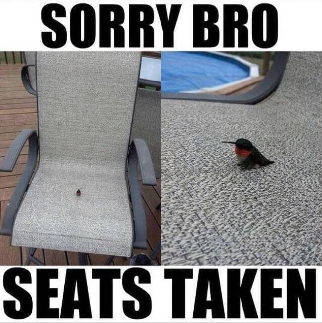 Vertebrate - SORRY BRO SEATS TAKEN