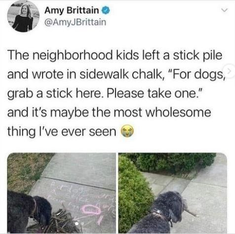 """Vertebrate - Amy Brittain O @AmyJBrittain The neighborhood kids left a stick pile and wrote in sidewalk chalk, """"For dogs, grab a stick here. Please take one."""" and it's maybe the most wholesome thing l've ever seen"""