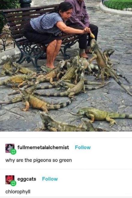 Shorts - fullmemetalalchemist Follow why are the pigeons so green eggcats Follow chlorophyll