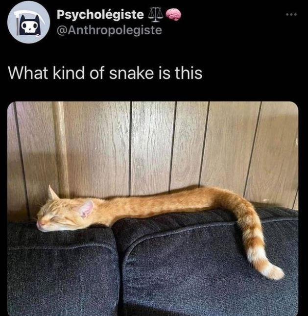 Cat - Psycholégiste L @Anthropolegiste What kind of snake is this