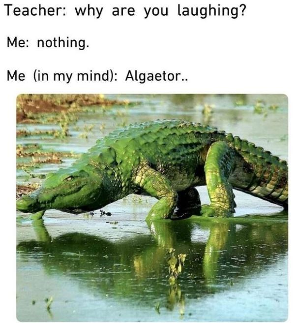 Water - Teacher: why are you laughing? Me: nothing. Me (in my mind): Algaetor.