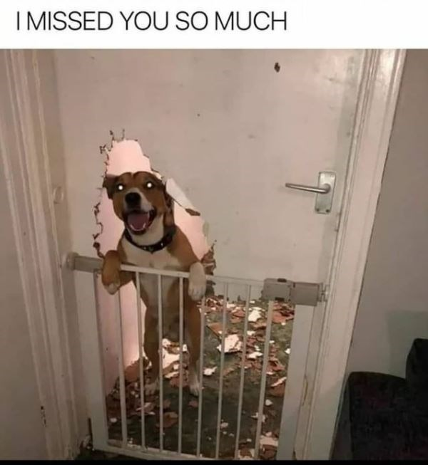 Dog - I MISSED YOU SO MUCH