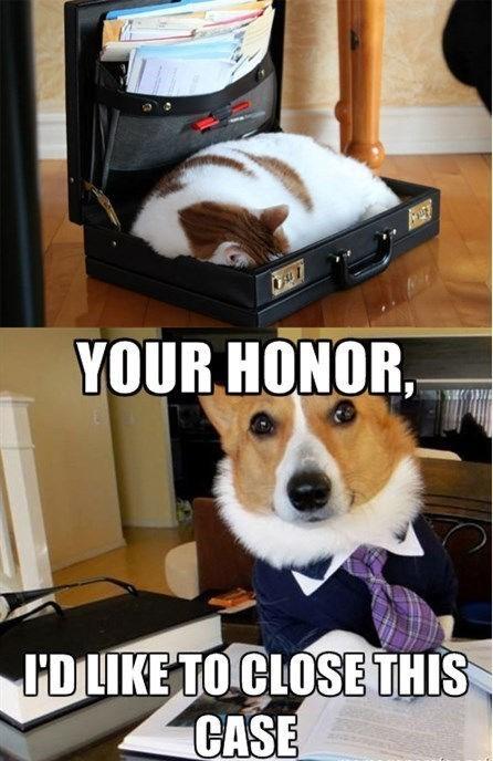 animal memes cat memes - 9609276928