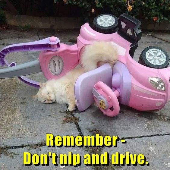 cat memes - 9609277184