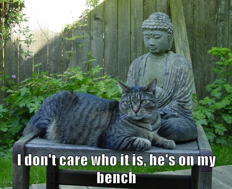 cat memes - 9609278464