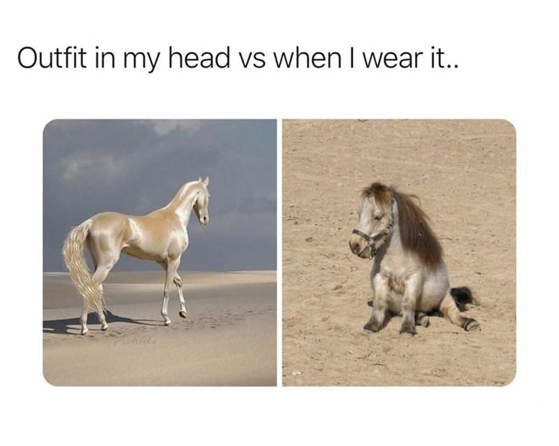 Horse - Outfit in my head vs when I wear it.. latelika