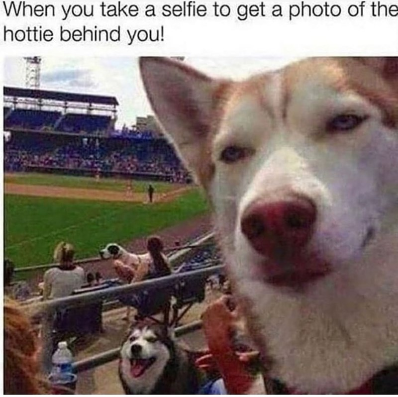Dog - When you take a selfie to get a photo of the hottie behind you!