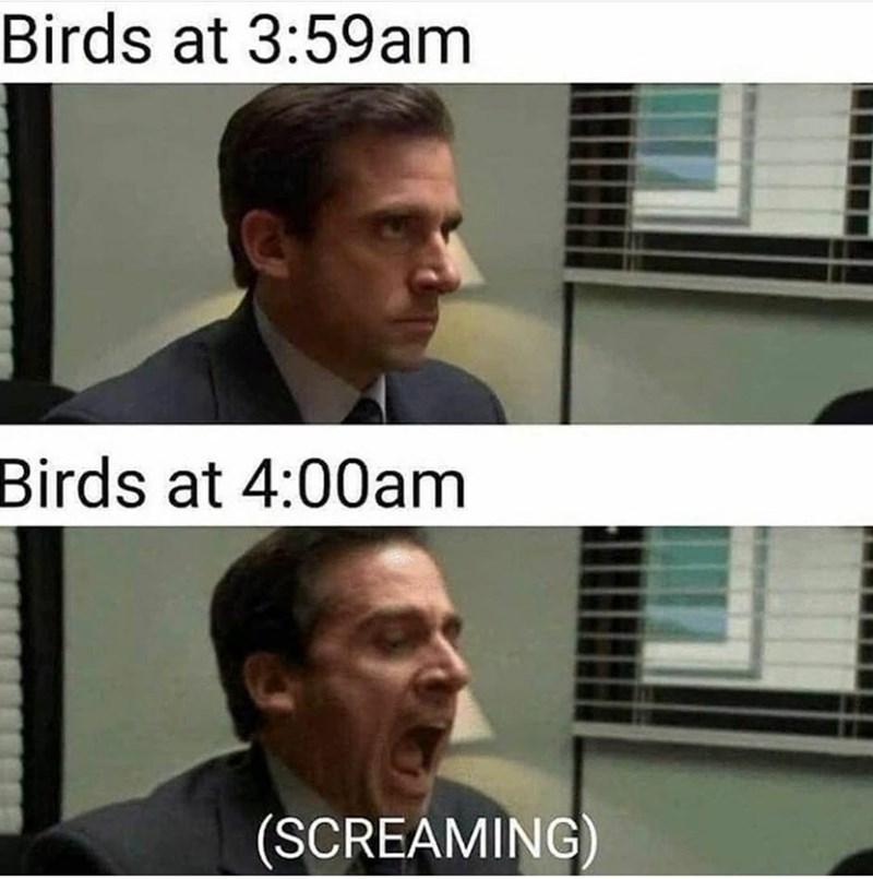 Forehead - Birds at 3:59am Birds at 4:00am (SCREAMING)