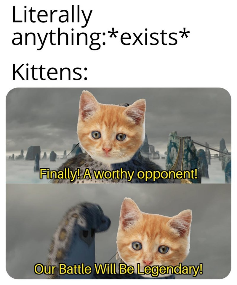 Cat - Literally anything:*exists* Kittens: Finally! Aworthy opponent! Our Battle Will Be Legendary!