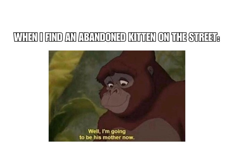 Primate - WHEN I FIND AN ABANDONED KITTEN ON THE STREET: Well, I'm going to be his mother now.