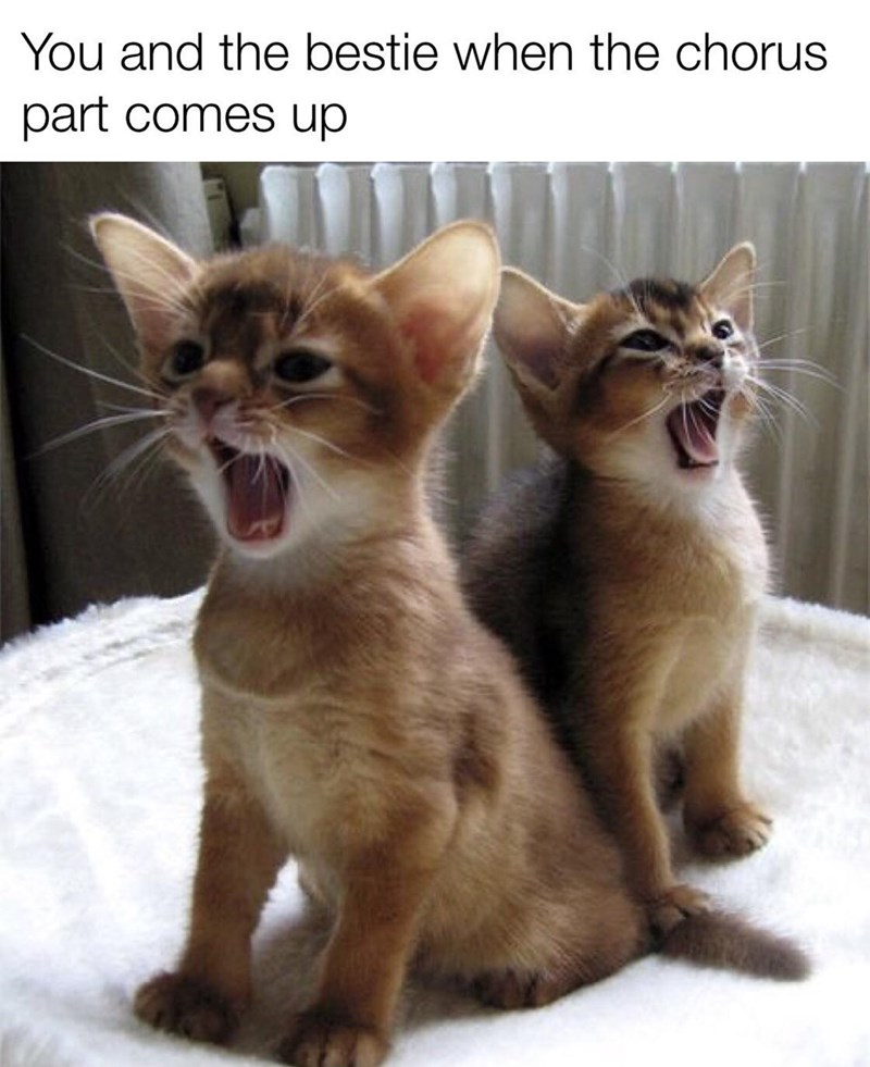Cat - You and the bestie when the chorus part comes up
