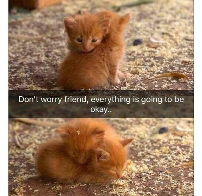 Cat - Don't worry friend, everything is going to be okay..