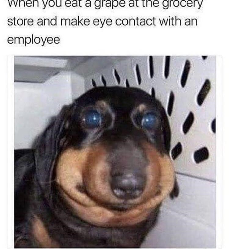 Dog - When you éat a grape at the grocery store and make eye contact with an employee