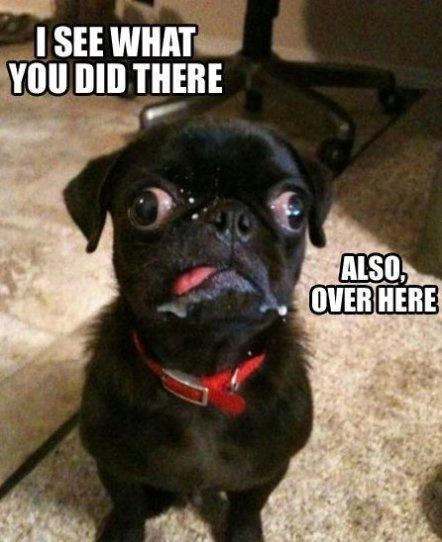 Pug - I SEE WHAT YOU DID THERE ALSO, OVER HERE