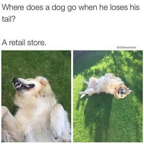 Dog - Where does a dog go when he loses his tail? A retail store. @DrSmashlove
