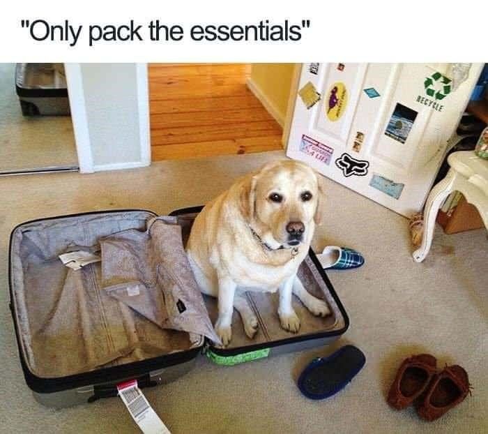 """Dog - """"Only pack the essentials"""" RECYELE"""