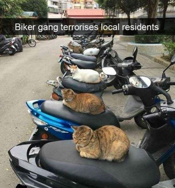 Tire - Biker gang terrorises local residents