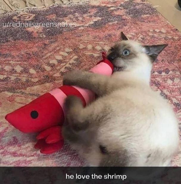 Carnivore - ulrednailsgreensnakes he love the shrimp