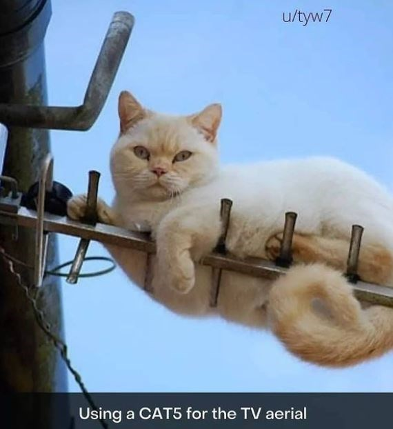 Cat - u/tyw7 Using a CAT5 for the TV aerial