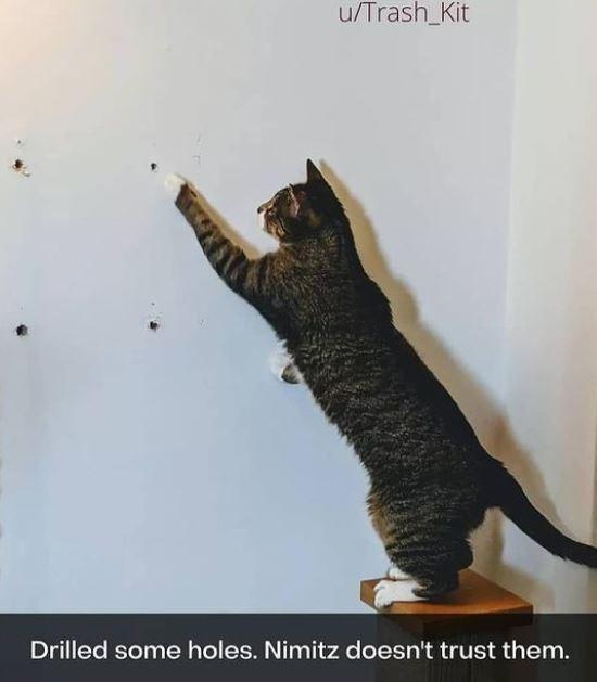 Cat - u/Trash_Kit Drilled some holes. Nimitz doesn't trust them.