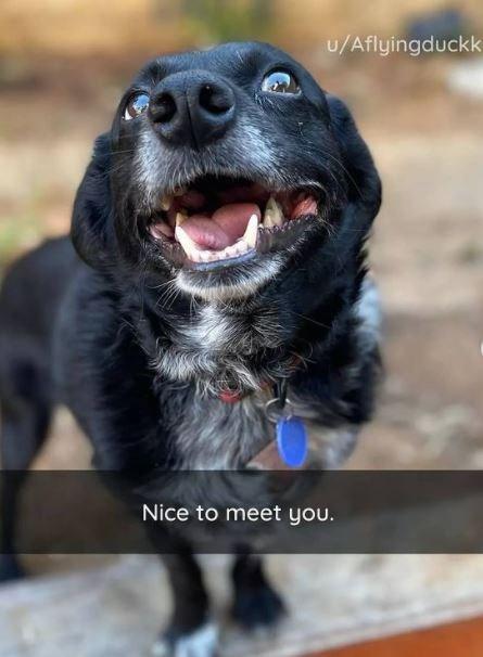 Dog - u/Aflyingduckk Nice to meet you.