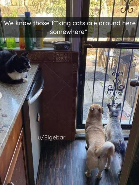 "Dog - ""We know those f**king cats are around here somewhere"" 101 u/Elgebar"