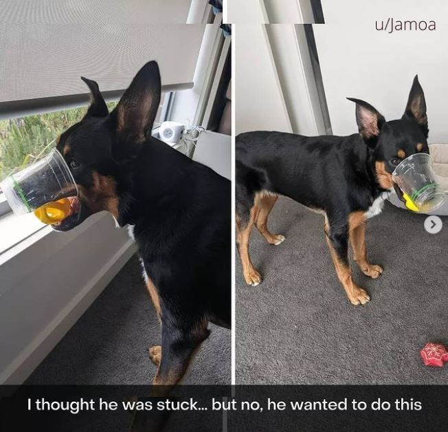 Dog - u/Jamoa I thought he was stuck... but no, he wanted to do this