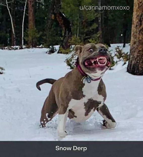 Dog - u/cannamomxoxo Snow Derp