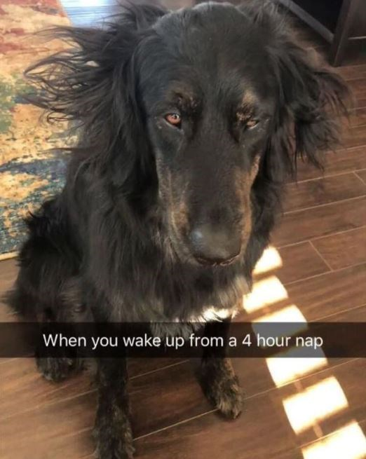 Dog - When you wake up from a 4 hour nap