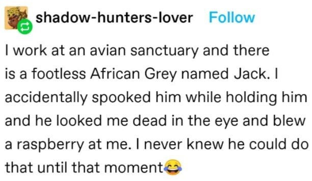Organism - shadow-hunters-lover Follow I work at an avian sanctuary and there is a footless African Grey named Jack. I accidentally spooked him while holding him and he looked me dead in the eye and blew a raspberry at me. I never knew he could do that until that momente