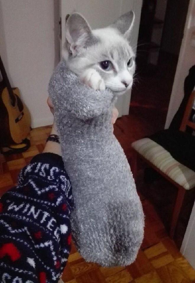 Cat - SI WINTER