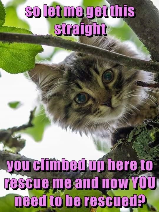 Cat - so lerme getthis straight you climbed up here to rescue me and now YOU need to be rescued?