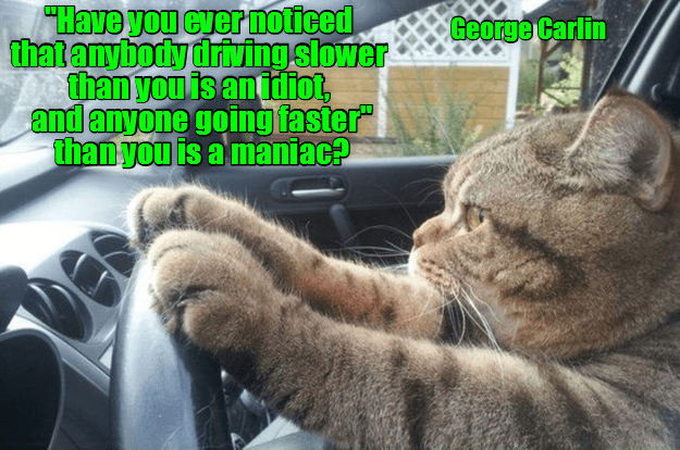 """Cat - """"Have you cver noticed thatanybodydriving slower than you is an tdiot, and anyone going faster"""" than you is a maniac? George Carlin"""