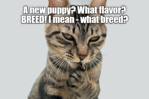 Cat - Anew puppy? What flavor? BREED! I mean -what breed?