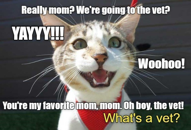 Cat - Really mom? We're going to the vet? YAYYY! Woohoo! You're my favorite mom, mom. Oh boy, the vet! What's a vet?