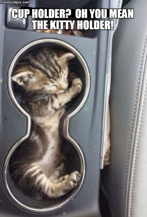 Hair - Funnycatpix.com CUP HOLDER? OH YOU MEAN THE KITTY HOLDER!