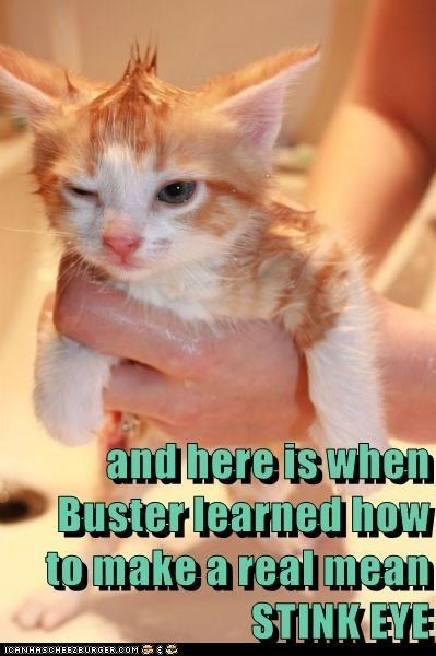 Cat - and here is when Buster learned how to make arealmean STINKEYE ICANHASCHEEZEURGER.COM