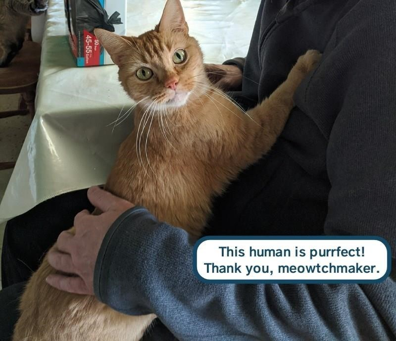 Cat - This human is purrfect! Thank you, meowtchmaker. 50 45-55
