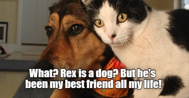 Head - What? Rex is a dog? But he's been my best friend all my life!