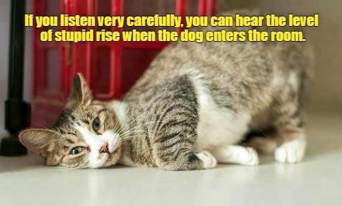 Cat - If you listen very carefully, you can hear the level of stupid rise when the dog enters the room.