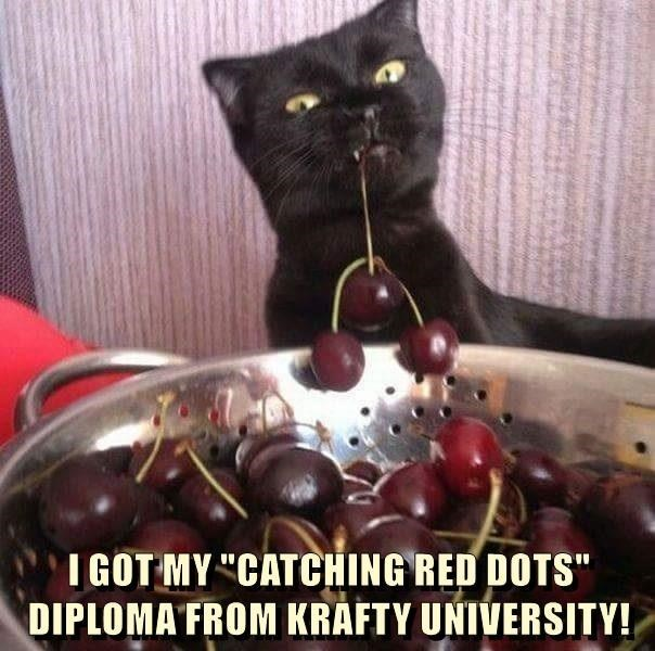 """Cat - I GOT MY """"CATCHING RED DOTS"""" DIPLOMA FROM KRÁFTY UNIVERSITY!"""
