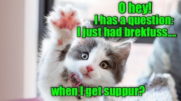 Cat - Ohey! Ihas aquestion: Ojust had brekfusS. when Igetsuppur?