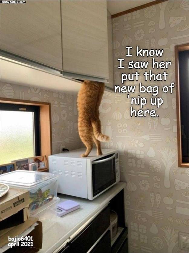 Mirror - Funnycatpix.com I know I saw her put that new bag of nip up here. GZN EEE 57773 Fnsso 688 bajio6401 april 2021