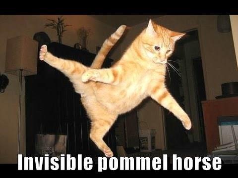 Cat - Invisible pommel horse NILIN BRU