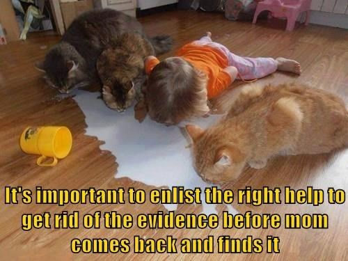 Cat - It's important to enlist the right help to get rid of the evidence before mom Comes back and finds it