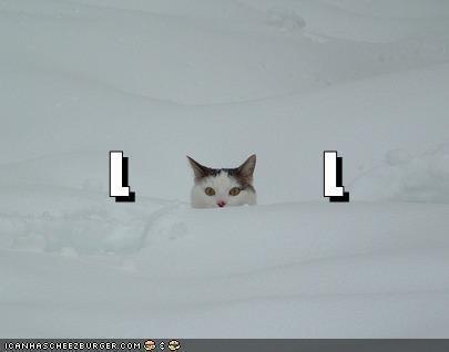 Cat - ICANHASCHEEZEURGER.COM