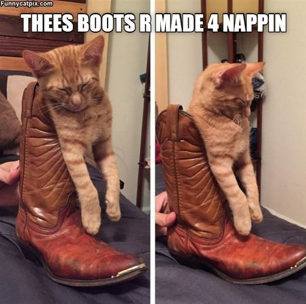 Brown - Funnycatpix.com THEES BOOTS RMADE 4 NAPPIN