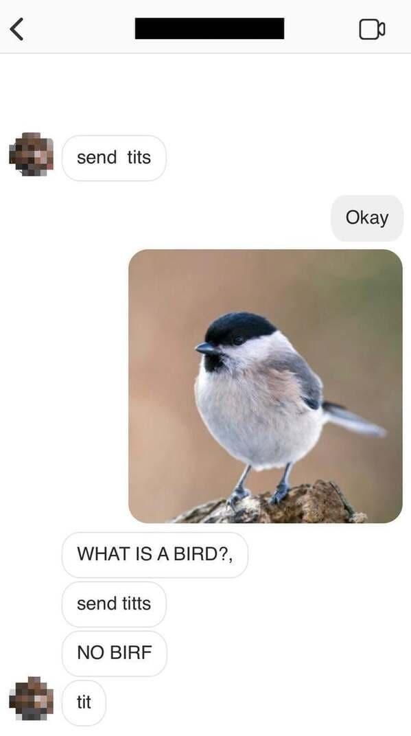 Bird - send tits Okay WHAT IS A BIRD?, send titts NO BIRF tit