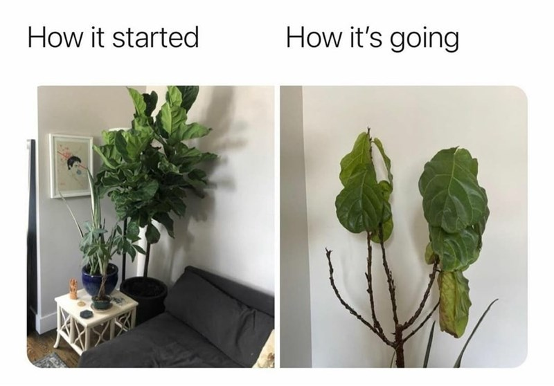 Plant - How it started How it's going