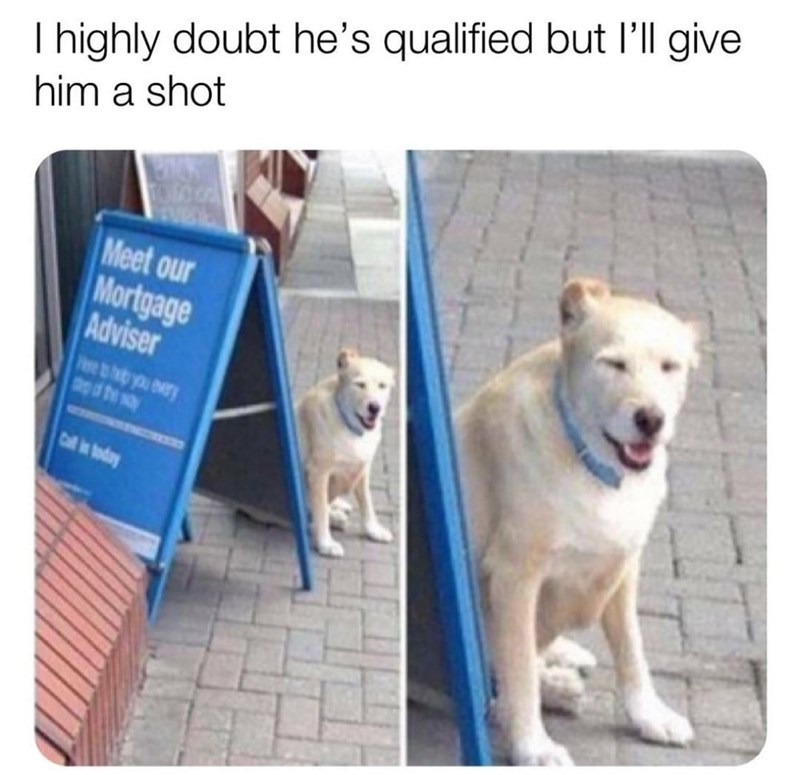Dog - I highly doubt he's qualified but l'll give him a shot Meet our Mortgage Adviser bb you ry apd be say Call in today